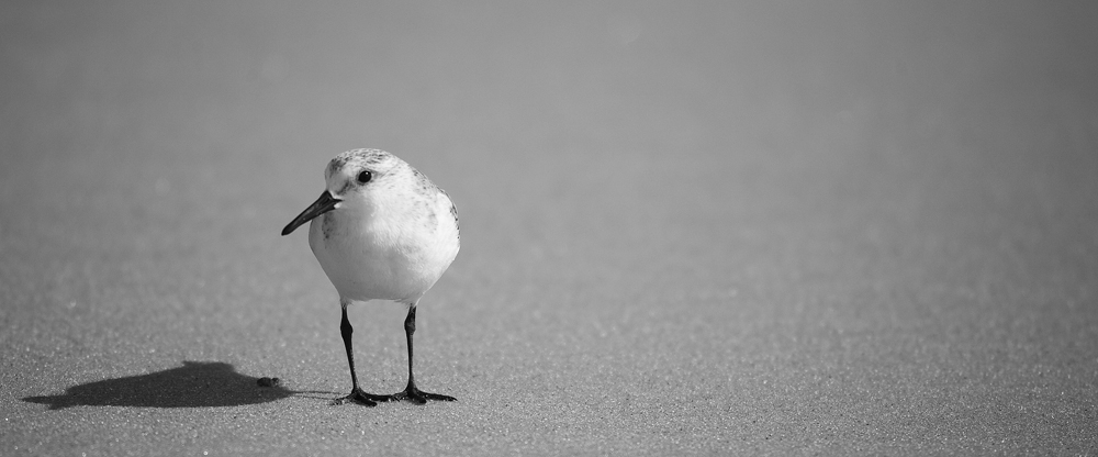 2008 sanderling fire island new york bw 1-1220